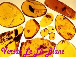 Essência Versão Âmbar (Grife Le Lis Blanc)
