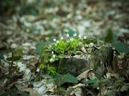 Essência Cascas e Folhas