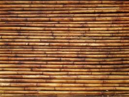 Essência Vela Bambu Broto