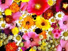 Essência Flores do Campo
