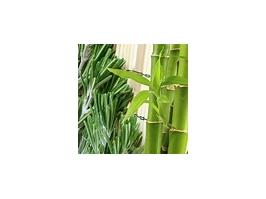 Essência Bambu c/Alecrim
